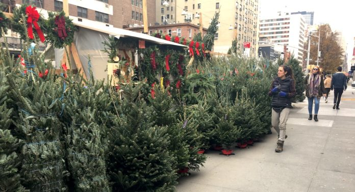 Christmas Tree In Nyc.The Christmas Tree Sellers In Nyc They Re From Quebec